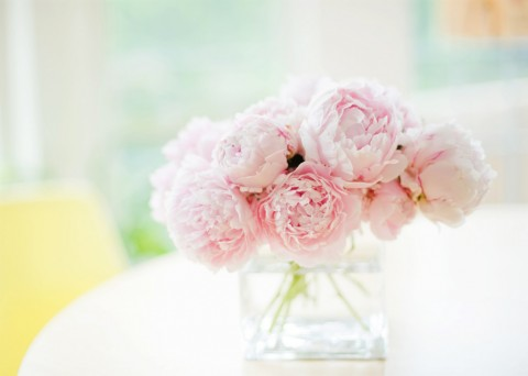 white-and-pink-peonies-wallpaper-4
